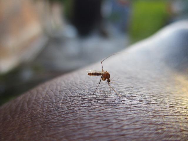 Mosquito 2566773 640