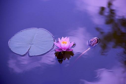Lotus 1205631  340